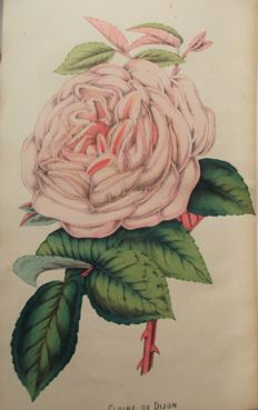 The Floricultural Cabinet and Florists' Magazine - 1854/1855