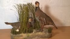 Taxidermy - Red-legged Partridges at nest - Alectoris rufa - 43 x 17 x 34cm