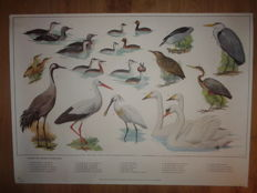 Four lovely school posters with many and various birds.