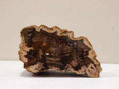 Lot of polished specimens of: 1.pertrified wood around 50 million years old, 2. Agatewith quartz  polished, 3.Polished agate with sard and quartz