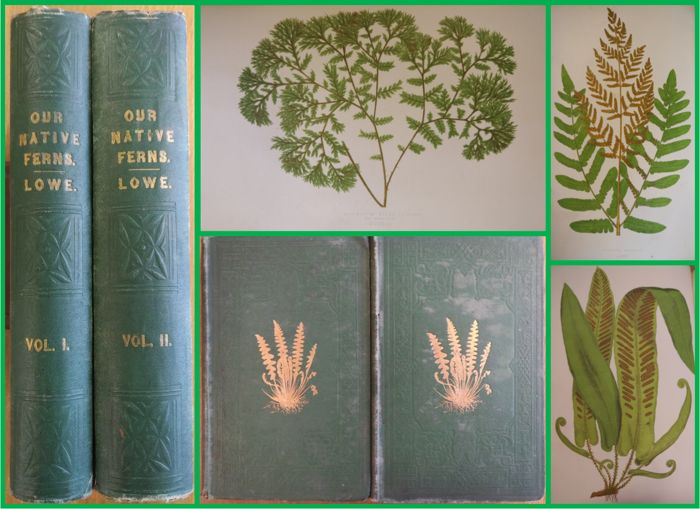 E.J. Lowe - Our Native Ferns - 1874