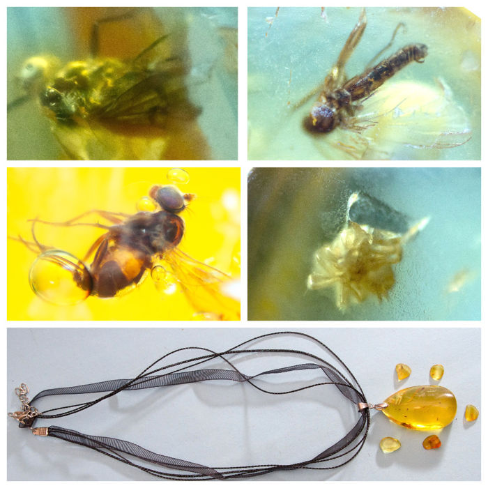 Big Baltic amber pendant with insect, inclusions fly (Diptera) + 5 other stones - 13х24х40 mm