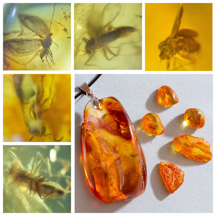 Big Baltic amber pendant with insect, inclusions fly (Diptera) + 5 other stones - 17х25х43 mm