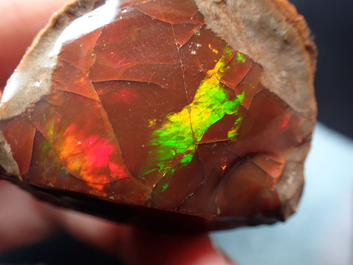 Precious Multicolored Chocolate Opal, very rare a and cuttable 144.55ct - 40.12×37.81×22.67 mm - 28.91 g