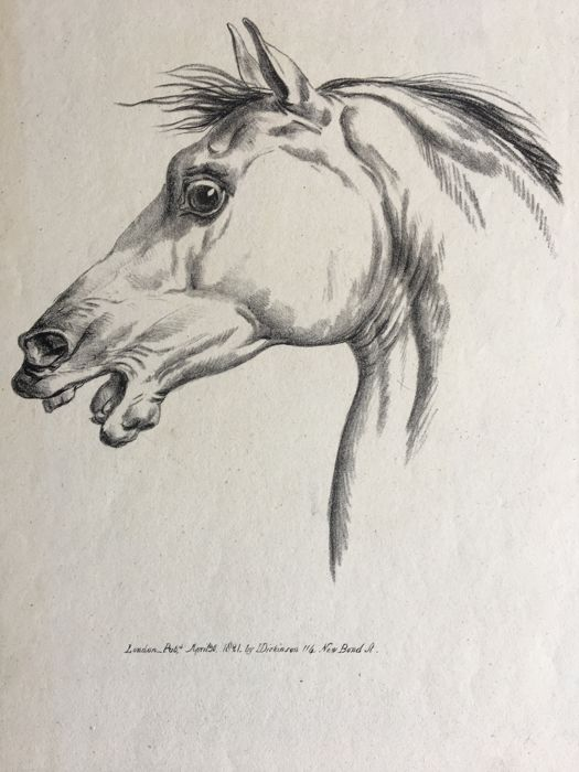 E. Purcell after Carle Vernet - Published by  I Dickinson 114 New Bond Str - Study of a horse's head