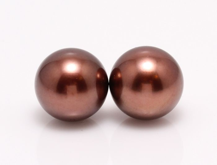 NO RESERVE PRICE - 18 kt. Yellow Gold - 10x11mm Chocolate Tahitian Pearls - Earrings