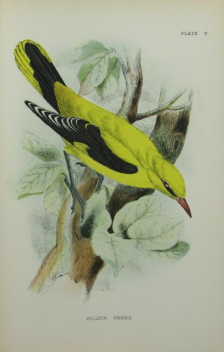 R. Bowdler Sharpe - A Hand-Book to the Birds of Great Britain - 1896/1897