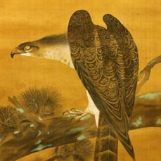 Hand painted hanging scroll - With signature and seal 'Chozan' 朝山 - Hawk on pine tree - Japan - Taisho Period (1910-1925)