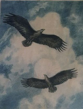 Unreadable - see photo - Two Sea Eagles soaring in a blue sky