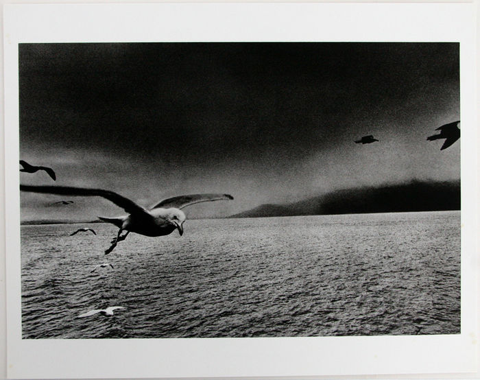 Signed; Josef Koudelka - Animal, Portfolio 314/700 - 1990
