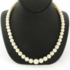 18 kt. White gold - Necklace - 0.48 ct Diamond - Pearl