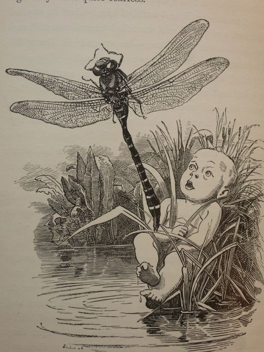 Charles Kingsley - The water babies : Fairy tale for a land baby - 1891