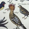 Classical Print Auction (Flora & Fauna)