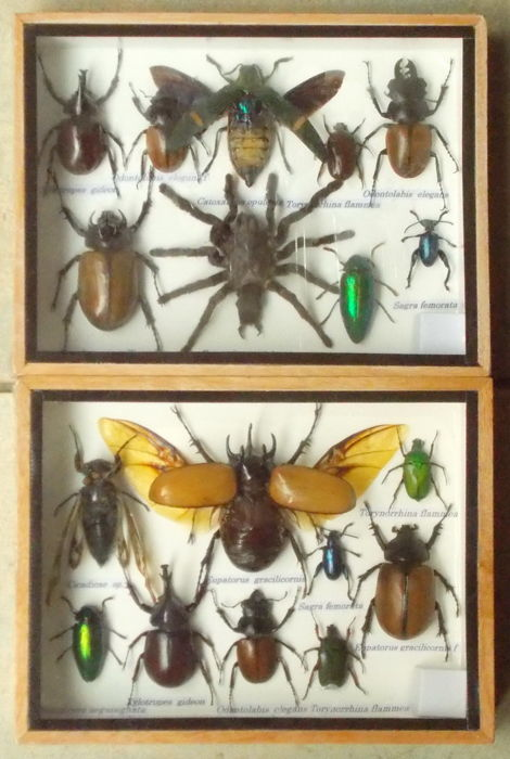 Insect collection boxes - 20 x 15cm  (2)