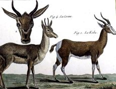 Pierre Joseph Bonnaterre (1752-1804) - 3 quarto engravings of Deer - 1780