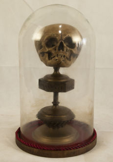 Anatomical, mortuary reliquary replica - Baby's skull, mounted under glass dome - 40cm