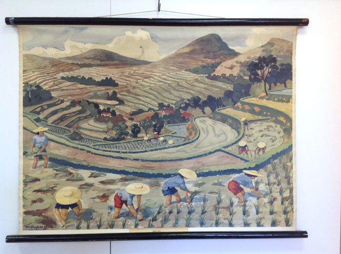 School poster:  The rice cultivation on paddy field in Indonesia/Asia.  The cultivation of rice on the terraces is a recognizable image of Asia where rice is the national food