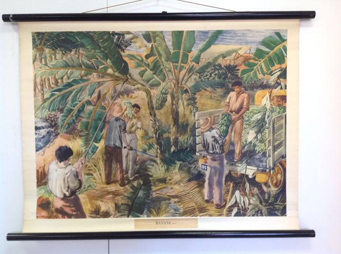 School poster:  The banana cultivation in South America.