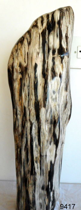 Petrified wood - 530 mm - 7,2 kg