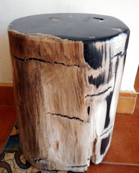 Mini site table from trunk of petrified wood - 31 x 23 cm - 23,2 kg