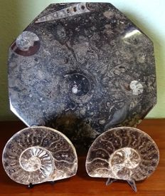 Large fossil plate and polished ammonite (3) – 3.600 kg