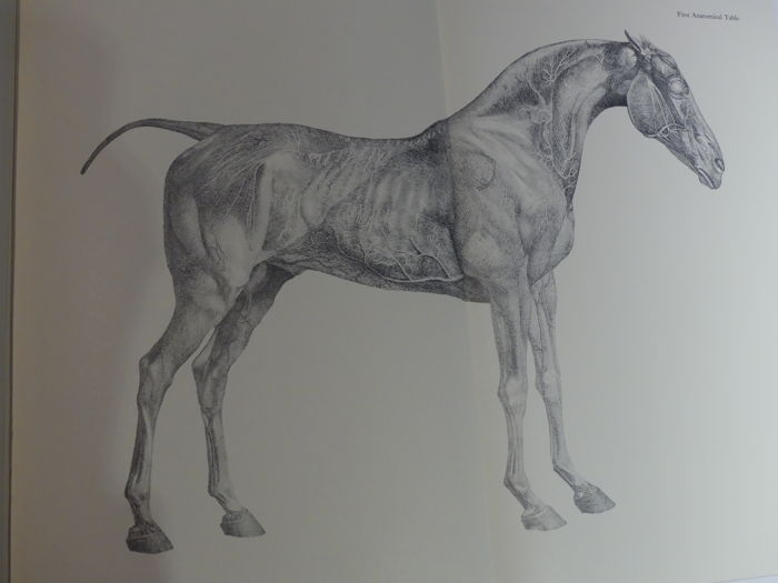 George Stubbs The Anatomy Of The Horse 1965 Catawiki