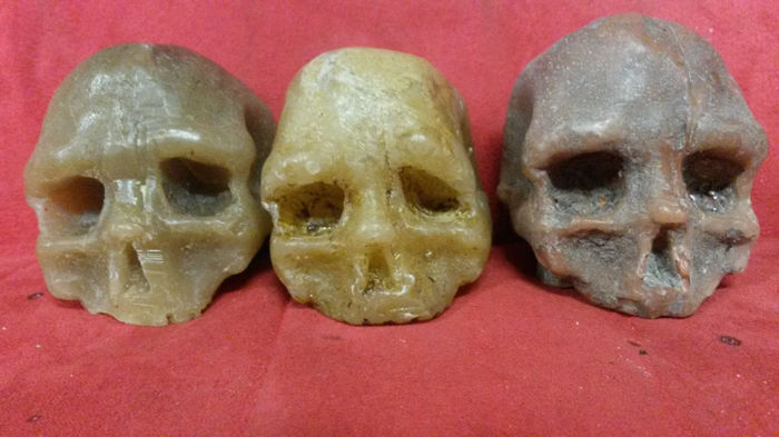 Three wax skulls, Italy, 19th century