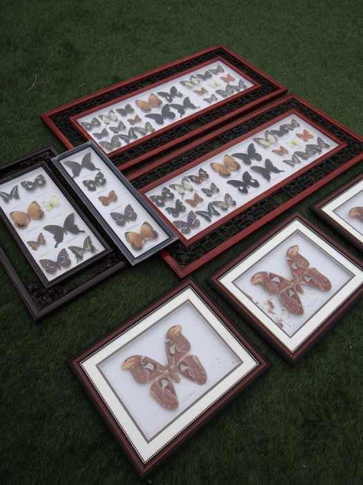 Large collection of various frames with Asian Butterflies, with minor damage - 28 x 33cm  (14)