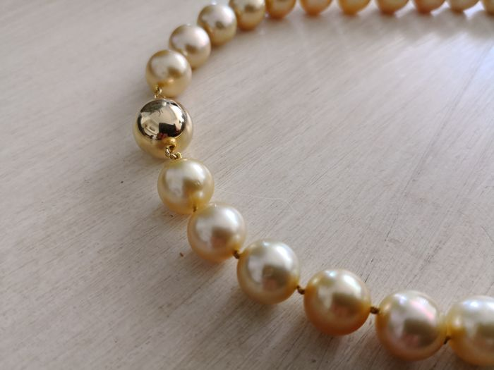 Necklace of Australian Pearls with 18 kt gold clasp, 33 round 11.20-12 mm golden pearls with high orient