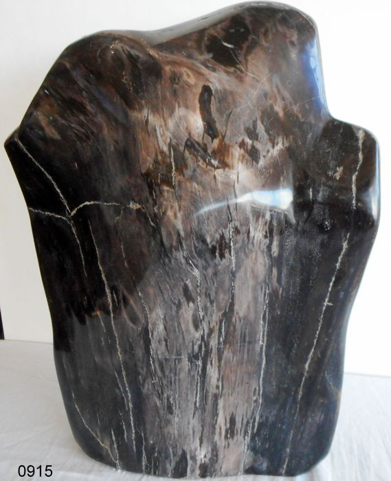 decoration; Petrified Wood - 370 x 300 mm - 9 kg
