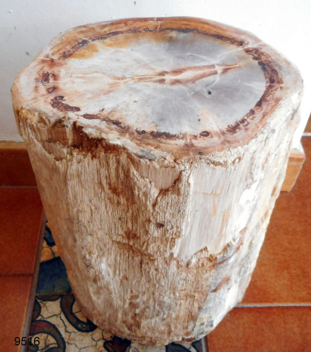 Mini side table out trunk of petrified wood -  310 x 210 mm - 15,2 kg