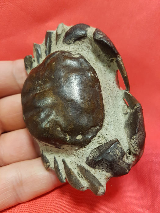 Large crab fossil with well preserved claws - 86 x 60 x 17 mm - 100 g