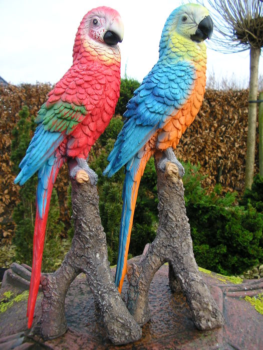 American style: Two beautiful parrots