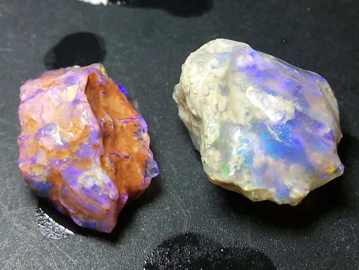Australian Shells Fossil Opalized - 1.8 to 1.7 cm - 20.1 ct (2)