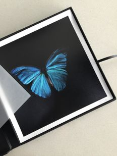 Alexander James - 'Swarm' underwater butterfly box set of 4 prints