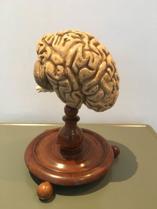 great pair of  antique plaster polychrome brains on base