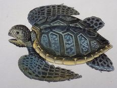 George Shaw (1751-1813) - 3 x engravings - Turtles, Green Turtle, Tortoise - 1801