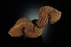 Big natural Coprolite - Turtle fossil poo - well preserved - 10,5 x 4,5 x 3,2 cm - 192 gm