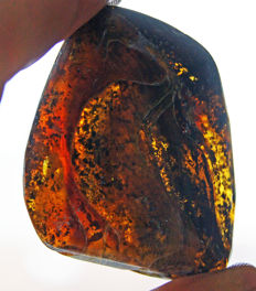 Large piece of Mexican polished amber - 37.3 g - 6.1 x 4.7 x 25 mm