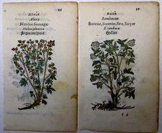 Leonhard Fuchs (1501-1566) - Hollyhocks, Fern, Elder - 4 woodcuts, 2 leaves - 1551