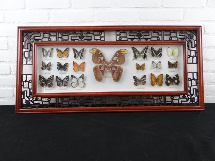 Exotic Butterflies in Oriental-style Frame - various - 92 x 42cm