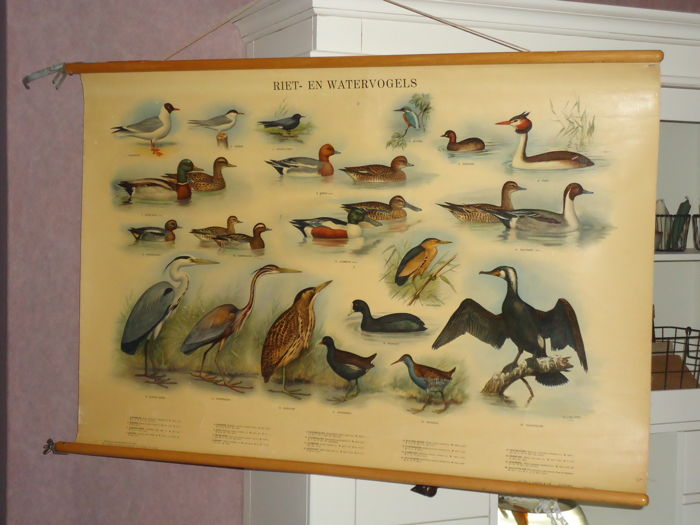Old school poster, 'Reed and water birds' (in excellent condition)