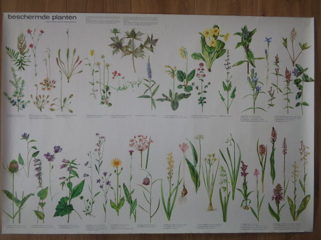 "Old school poster / School map ""protected plant species"""