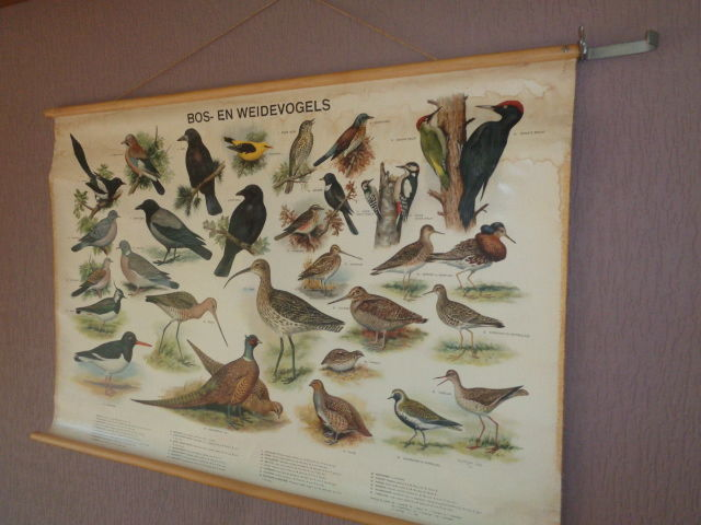 "Old school poster / school map on linen ""forest and meadow birds.""   Images of 30 birds found in the forest and meadows such as lapwing, pheasant pair, golden oriole, etc."