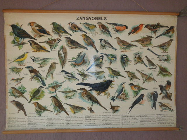 "Old original school poster / school plate with ""song birds"" on this linen plate there's 57 birds that live in The Netherlands."