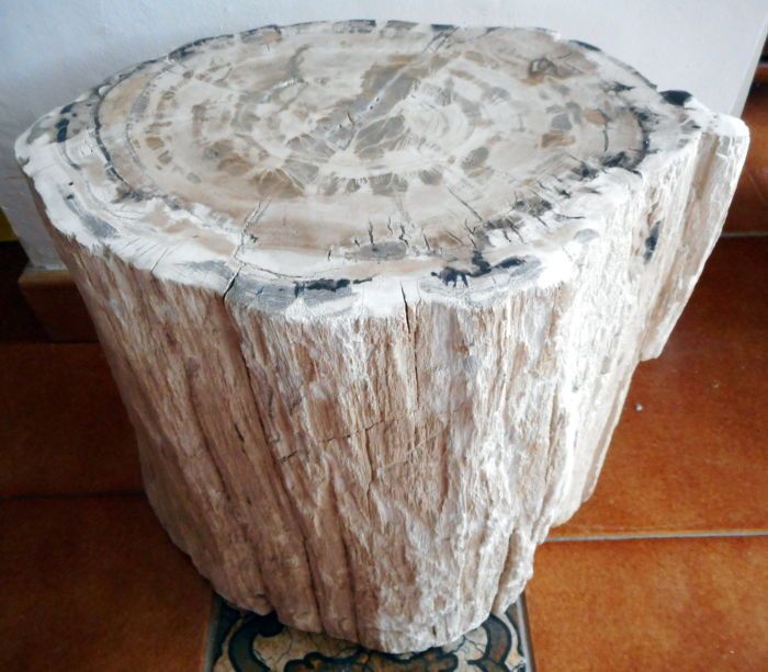 Site table: Trunk of polished petrified wood - 31 x 31 cm - 29.2 kg