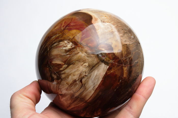 Good Qaulity polished Petrified Wood sphere - 11.88 cm - 2260gm