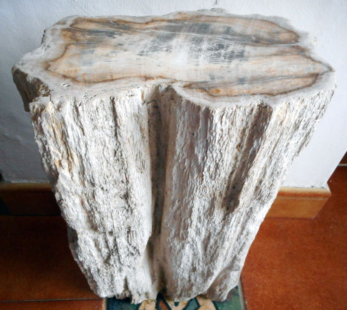 Mini side table - polished Petrified Wood -  40 x 20cm - 15,6 kg