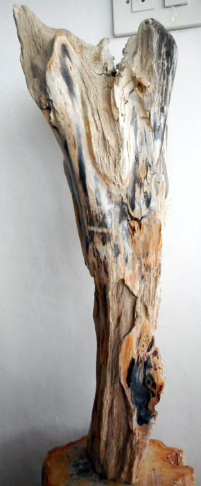 Interestingly shaped trunk of Petrified Wood - 65cm - 9,6 kg