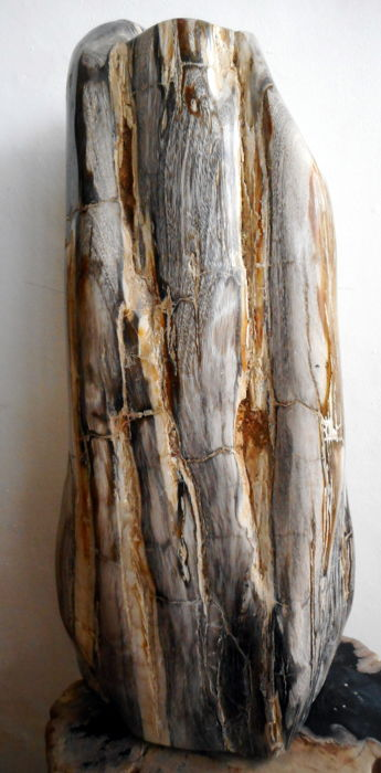 Trunk of petrified wood - 47 cm - 19 kg